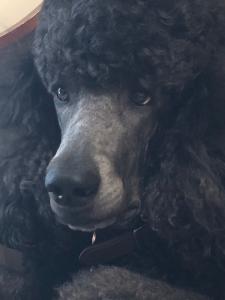 tsartwork's Profile Picture