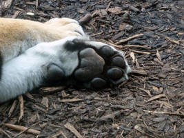 Tiger Paw by TheFacelessFool