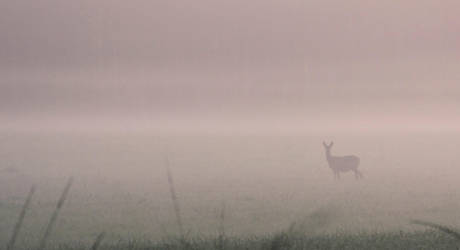 Deer in fog by Drummyralf
