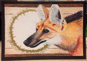 Maned Wolf by DanielleMWilliams