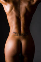 Butterfly back by wphotography