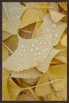 Gingko leaves by QueenOfArchers