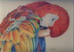 Parrot by EmeraldIsleElf