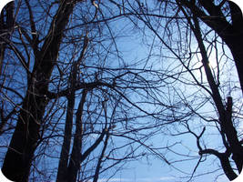 Blue Sky Brown Trees by Rainbow826