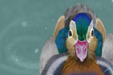 Mandarin Duck by crazycrankycritter