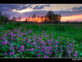 IMG_9500 Spring by Klek
