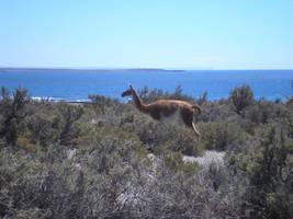 Sexy Llama, task 12 by agosbeatle
