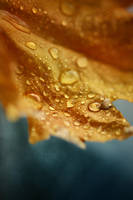 autumn rain by Anti-Pati-ya