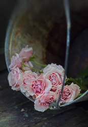 roses in a bucket 03 by Anti-Pati-ya