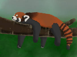 Sleepy Red Panda - Request by glitteringpeaches by CleverAsFoxes