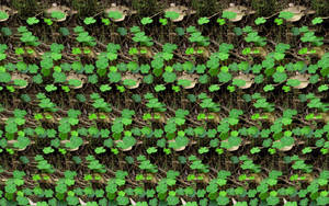 Shamrock Photostereogram by 3Dimka