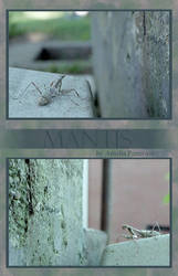 Mantis by amichuxx