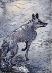 silver fox ACEO by fingalificated