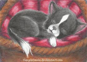 Sleep Time by SimpleCecile