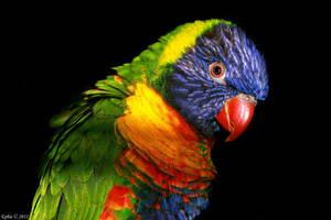 Colourful by Epheme