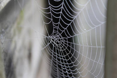 web of Pearls by akville
