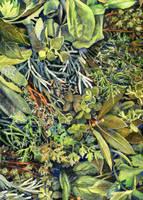 Herbs by JoaRosa