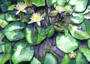 Water lilies by JoaRosa