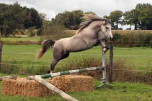 Pony05 by vivstock