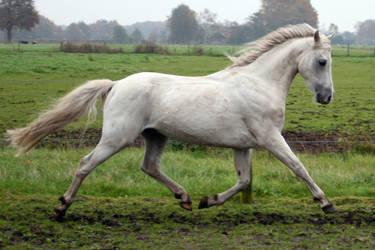 pony15 by vivstock