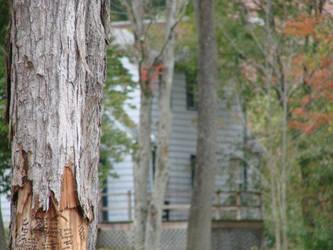 wish on a tree by zindionne