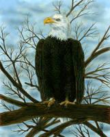 Eagle by MorganCrone
