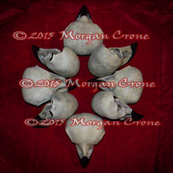 Corvid Skull Arrangement by MorganCrone