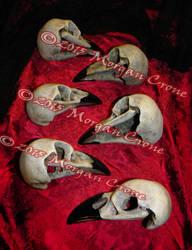 Crow Skull Line by MorganCrone