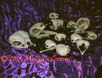 Lots of Skulls by MorganCrone