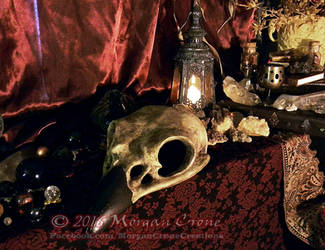 Giant Corvid Skull 2 by MorganCrone