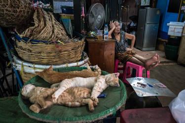 Three Cats by niklin1