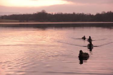 Ducks at a Loch by Beachrockz4eva