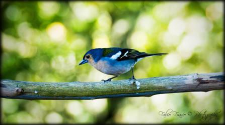 Blue Bird by Barracada