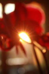 Flower Sun by Jeanne128