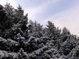 Snowy Pine Trees by Angelus-Fallen