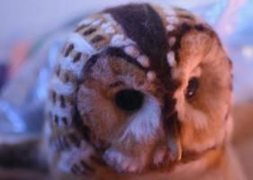 WIP - Tawny Owl by Hillamer