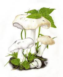 St. George's mushroom by Rosentod