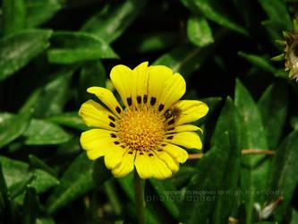 Yellow 1 by Miss-Mahawe