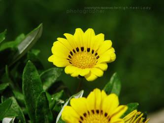 Yellow 2 by Miss-Mahawe