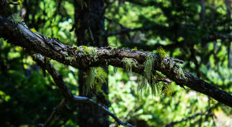 Moss On a Branch by Erzsabet