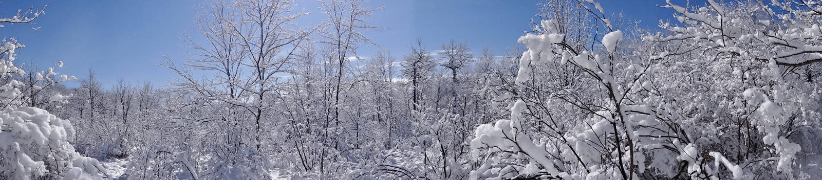 Winter Trees by puppydogbonz