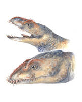 Umoonasaurus Demoscyllus by evil-santa