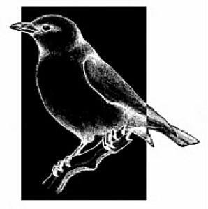 antoniavogel's Profile Picture