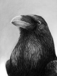 Waiting for November (Do Ravens Smile?) by antoniavogel
