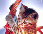 KMCK means:  Kitty my cute kitty by andreareno
