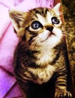 kitty by shinaaa