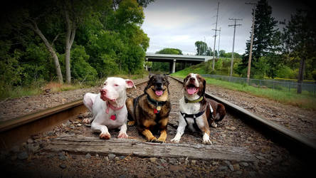 Train Track Strays by Star-Waffle