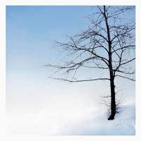 winter wonderland by JuliaDunin
