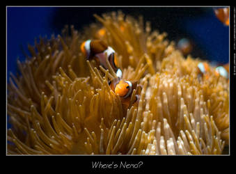 Where's Nemo? by leafnode