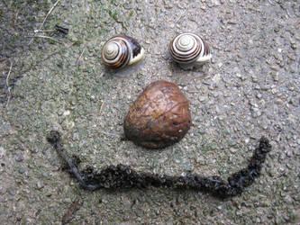 Snail face by BlackToucan